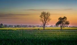 Piękny zmierzch, drzewa i gwiazdy, Fotografia Royalty Free