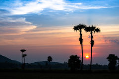 Piękny zmierzch i sylwetki drzewko palmowe na mrocznym czasie Obrazy Stock