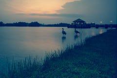 Piękny zmierzch przy bagna, Putrajaya Zdjęcie Stock