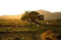 Piękny zmierzch w polu Goa, India Obraz Stock