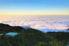 Piękny zmierzchu krajobraz z ginkgo drzewami, herbacianymi plantacjami i chmurami, Zdjęcie Royalty Free