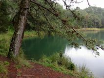 pięknych chiapas zielony jezioro fotografia stock