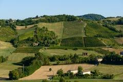 Piacenza Vineyards Stock Photos