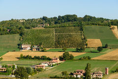 Piacenza Vineyards view Royalty Free Stock Photos
