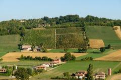 Piacenza Vineyards view Royalty Free Stock Photos