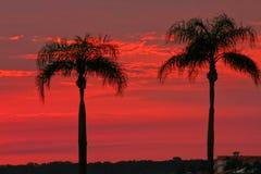 Piacere gemellare della palma Fotografia Stock Libera da Diritti