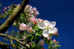 Piaceri della primavera immagini stock libere da diritti