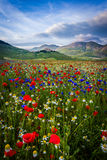 Piana Piccola, Castelluccio di Norcia Royalty Free Stock Photo