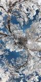 Pianeta infrarosso con gli alberi Fotografie Stock