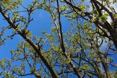 pianeta Terra reale di energia di vita delle piante della flora di estate della molla di realtà di resto di proposito di ispirazi Fotografie Stock Libere da Diritti
