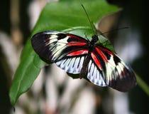 Pianino Kluczowy motyl Obraz Stock