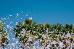 Piankowa partyjna rozrywka w tropikalnym kurorcie na słonecznym dniu zdjęcie royalty free