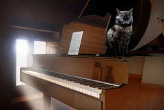 Piano and cat. Image of a piano near a lighted window, with a cat on it Royalty Free Stock Photography