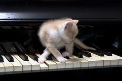 Piano cat. Kitten playing a song at old piano stock photos