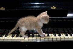 Piano cat stock photo