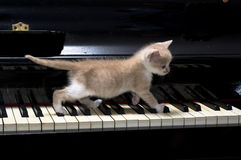 Piano cat. Little kitten walking on piano keys stock images