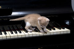 Piano cat. Kitten playing a song on old piano Royalty Free Stock Image