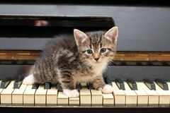 Piano cat. Musician, music. Royalty Free Stock Image