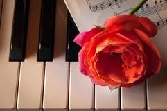 Piano con Rosa immagini stock libere da diritti
