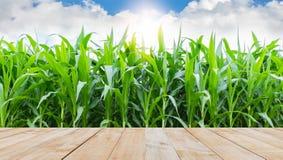 Piano d'appoggio di legno con l'agricoltura del cereale Fotografia Stock Libera da Diritti
