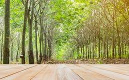 piano d'appoggio di legno con l'albero di gomma della sfuocatura del fuoco Fotografia Stock