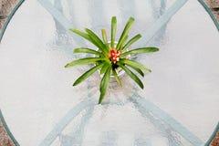 Piano d'appoggio di vetro con la pianta Fotografia Stock