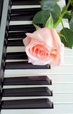 Piano de Rose Photo libre de droits