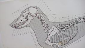 Piano di scheletro di un cane archivi video