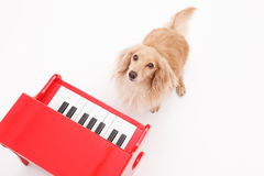 Piano and dog Stock Image