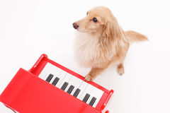 Piano and dog Stock Images