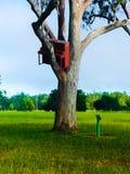 piano en un árbol de las inundaciones Fotos de archivo