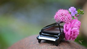 Piano flower bee river background hd footage nobody. Day light