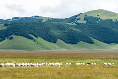 Piano Grande di Castelluccio (Italy) Royalty Free Stock Photos