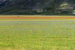 Piano Grande di Castelluccio (Italy) Stock Photography