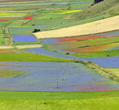 Piano Grande di Castelluccio (Italy) Royalty Free Stock Photo
