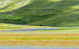 Piano Grande di Castelluccio (Italy) Royalty Free Stock Photography