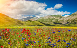 Free Piano Grande Summer Landscape, Umbria, Italy Royalty Free Stock Photo - 51404185