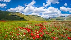 Piano Grande Summer Landscape, Umbria, Italy Stock Photo