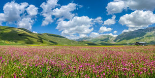 Piano Grande summer landscape, Umbria, Italy Stock Images