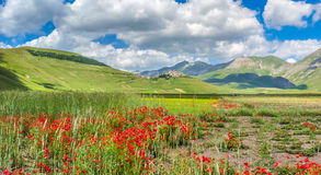 Piano Grande summer landscape, Umbria, Italy Stock Image