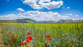 Piano Grande summer landscape, Umbria, Italy Royalty Free Stock Photos