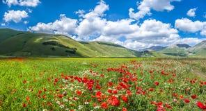Piano Grande summer landscape, Umbria, Italy Stock Photos