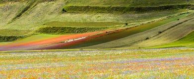 Piano Grandioso di Castelluccio (Itália) Imagens de Stock