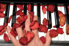 Piano hand and roses Royalty Free Stock Photo