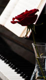 Piano keyboard and rose Royalty Free Stock Image