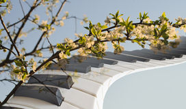 Piano keys on a background of plum blossoms