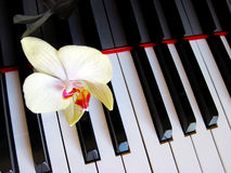 Piano keys with a flower, musical background. Royalty Free Stock Images