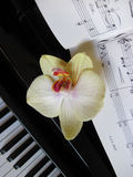 Piano keys with a flower, musical background. Royalty Free Stock Photos