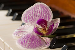 Piano keys with orchid. Beautiful still life with orchid flower Stock Images