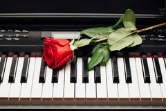 Piano keys and red rose Stock Image